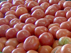 Ritter Farms Tomatoes